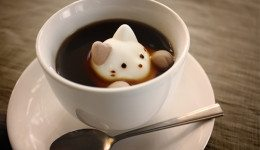 1.cat-coffee