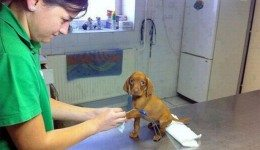 Pets-that-dont-want-to-go-to-the-vets