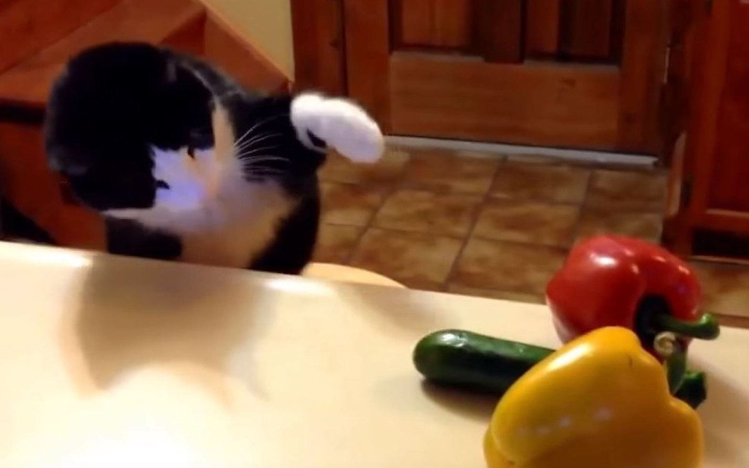 Why Cucumbers Freak out Cats