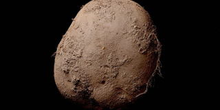 This Photo of a Potato Sold for Over $1,000,000