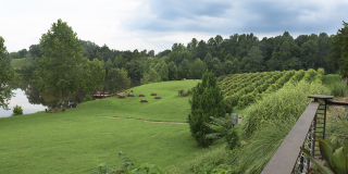 Wine-gina: Virginia is Wine Country